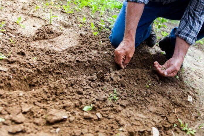 Ways Gardening Benefits Mental Health