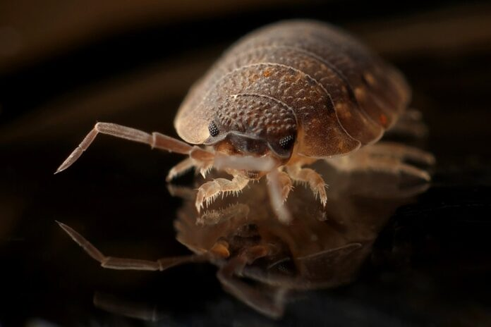 Tips on How to Get Rid of Bedbugs in Your House