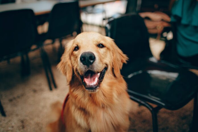 Business Ideas for Dog Lovers