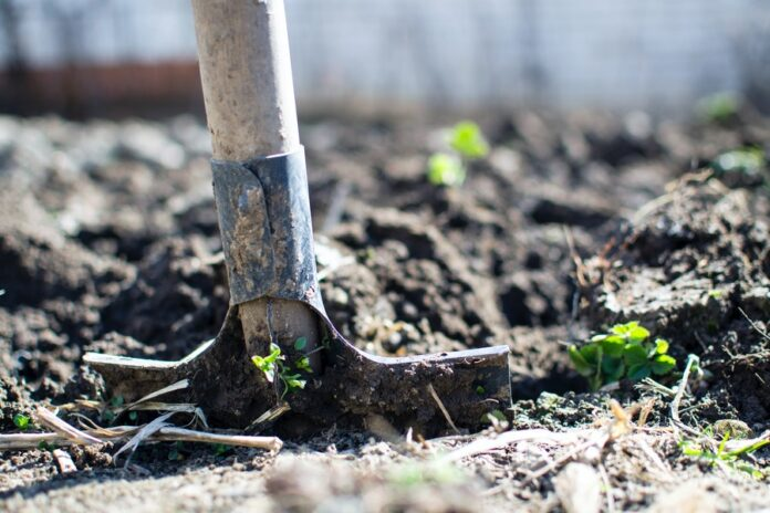 How to Turn Your Gardening Hobby Into a Lucrative Business